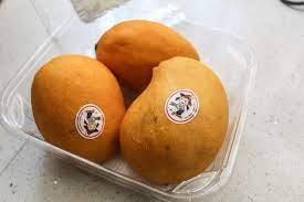 Mango- انبه