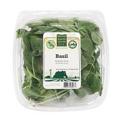 Basil - ریحان سبز