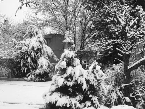 باغ فرخ19