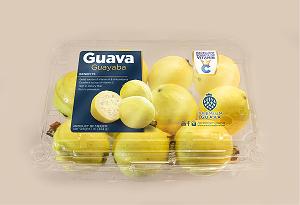 Guava - گواوا