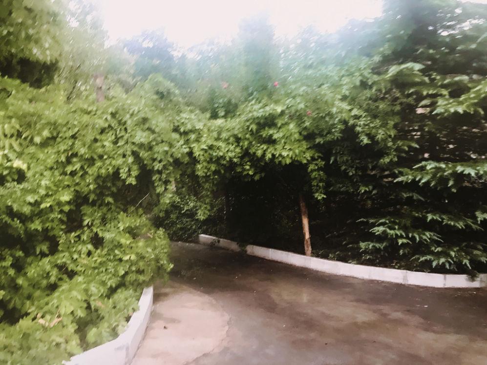 نمایی از باغ