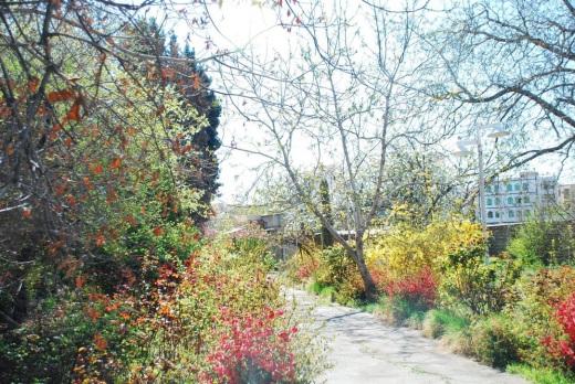 باغ فرخ23
