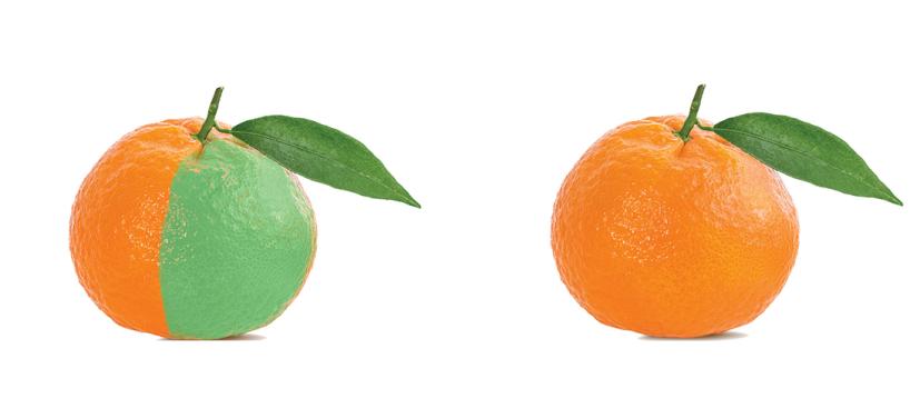 نارنگی، رنگآوری نارنگی